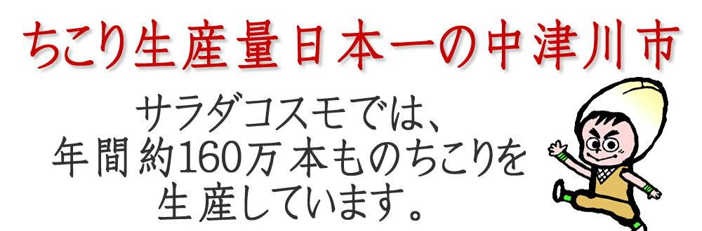 ちこり生産量日本一の中津川市