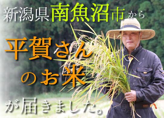 平賀さんのお米