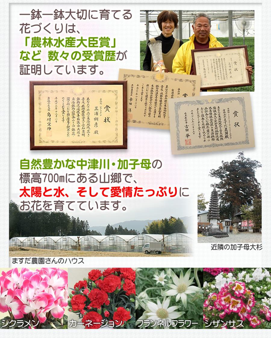 中津川加子母の山里で育てています