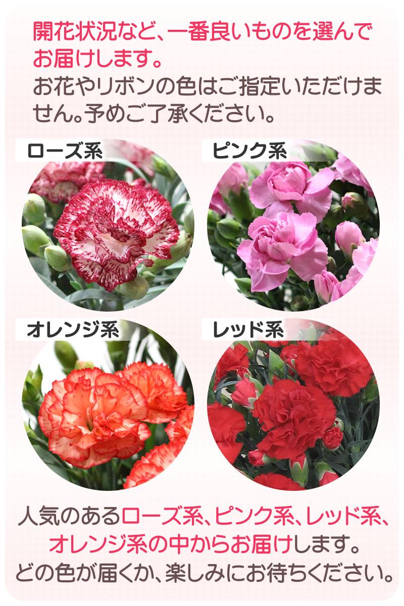 開花状況など一番良いものを選んでお届け