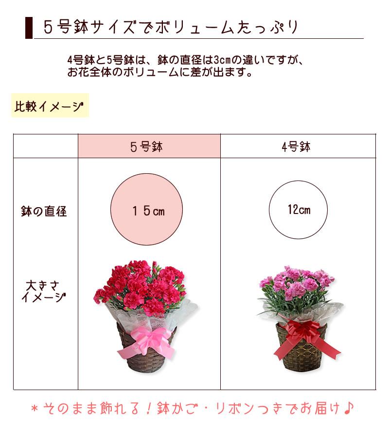 5号鉢のサイズイメージ