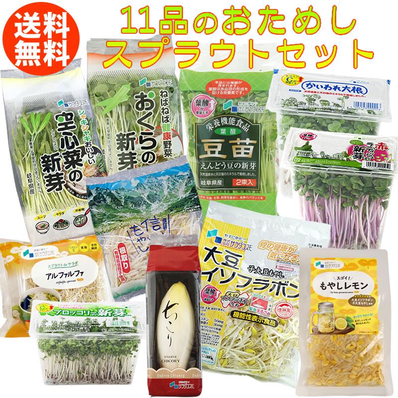 【ちこり入り】新鮮11品スプラウト野菜セット