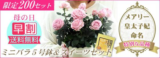 【200セット限定】母の日*プリンセス・オブ・インフィニティ5号鉢&スイーツセット【送料無料】